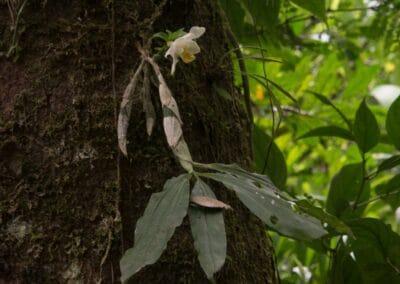 Chiapas - 33