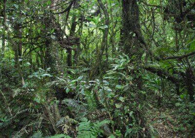 Chiapas - 35