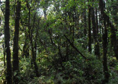 Chiapas - 49