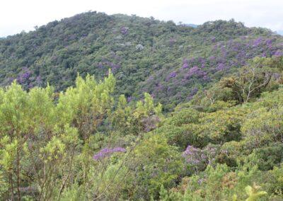 Brazil-Serra Bonita and Bahia - 17