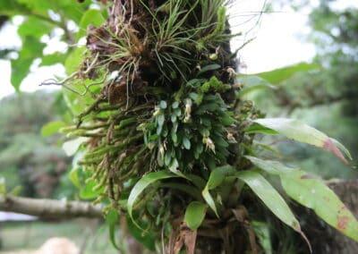 Chiapas - 41