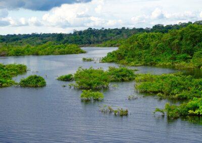 Rio Negro, Brazil - 245