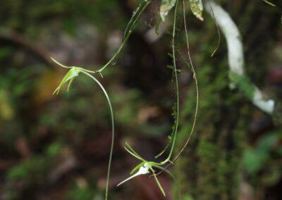 Madagascar - 283