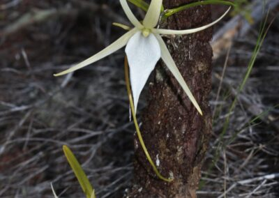 Madagascar - 143
