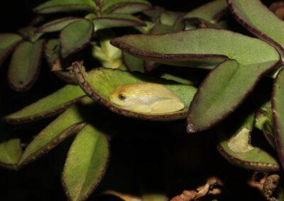 Madagascar - 173