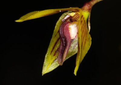 Madagascar - 145