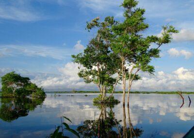 Rio Negro, Brazil - 225