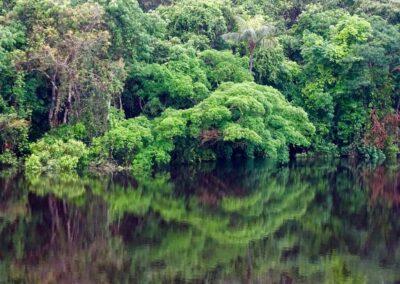 Rio Negro, Brazil - 65