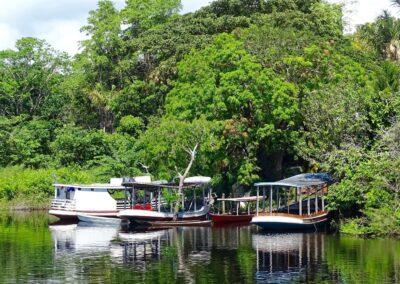 Rio Negro, Brazil - 189