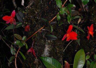 Rio Negro, Brazil - 187