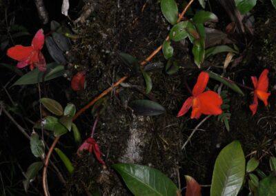 Brazil-Rio de Janeiro and Espirito Santo - 1