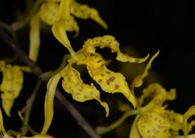 Ecuador-World Orchid Conference tour - 25