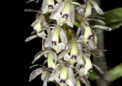 Ecuador-World Orchid Conference tour - 253