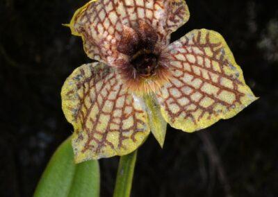 Ecuador-World Orchid Conference tour - 285