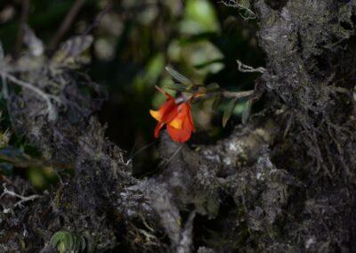 Ecuador-World Orchid Conference tour - 37