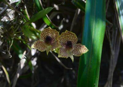 Ecuador-World Orchid Conference tour - 145