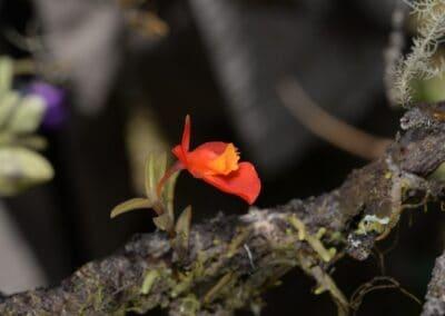 Ecuador-World Orchid Conference tour - 3