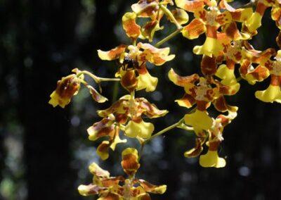 Ecuador-World Orchid Conference tour - 47