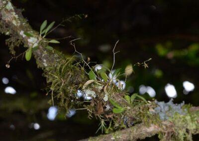Ecuador-World Orchid Conference tour - 243