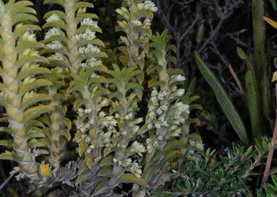 Ecuador-World Orchid Conference tour - 171
