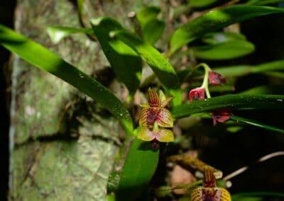 Madagascar - 151