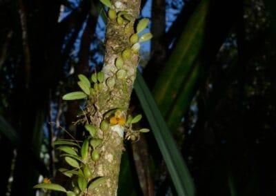 Madagascar - 159