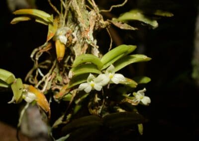 Madagascar - 113