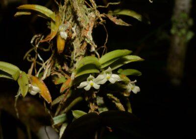 Madagascar - 79