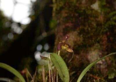 Papua New Guinea - 259