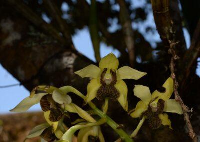 Papua New Guinea - 183