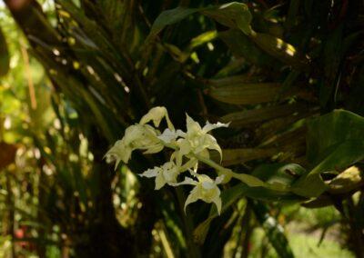 Papua New Guinea - 35