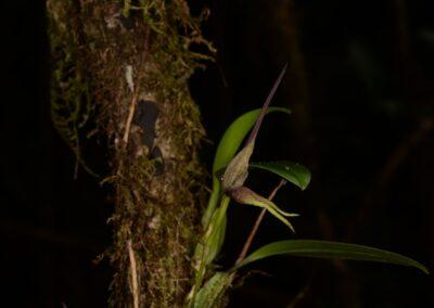Papua New Guinea - 177