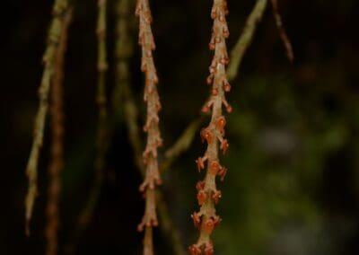Papua New Guinea - 57