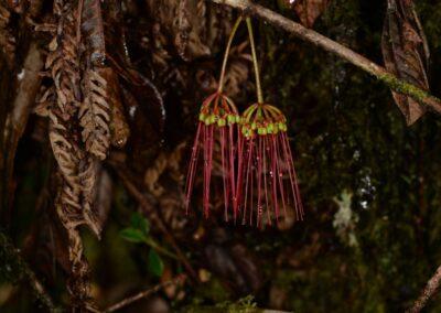 Papua New Guinea - 237