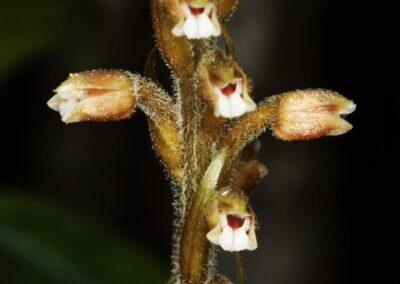 Madagascar - 271