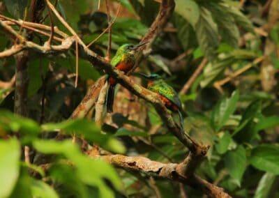Rio Negro, Brazil - 297