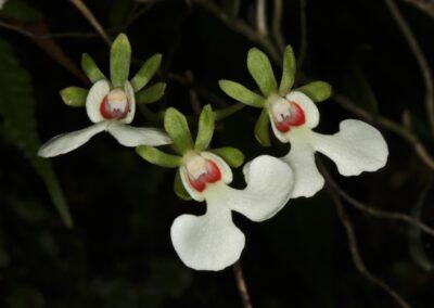 Madagascar - 281