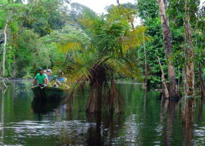 Rio Negro, Brazil - 229