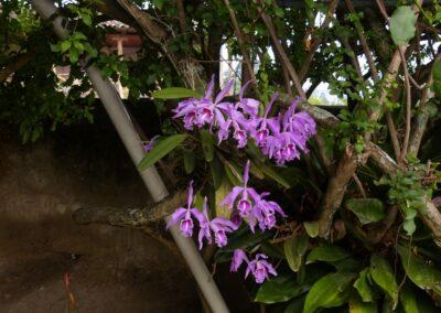Ecuador-World Orchid Conference tour - 49