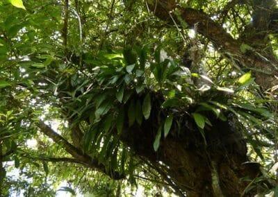 Ecuador-World Orchid Conference tour - 85