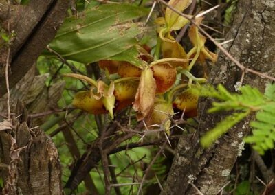 Ecuador-World Orchid Conference tour - 179