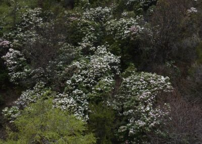 Northern Yunnan - 31