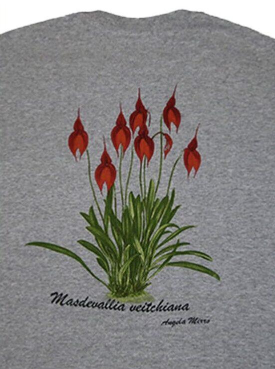 Masdevallia